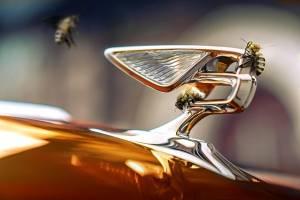 Bentley Bangkok กางแผนดำเนินธุรกิจเพื่อความยั่งยืน ปี 2565 พร้อมมุ่งสู่ผู้นำเข้าและตัวแทนจำหน่ายรถยนต์ Bentley อย่างยั่งยืนในประเทศไทย